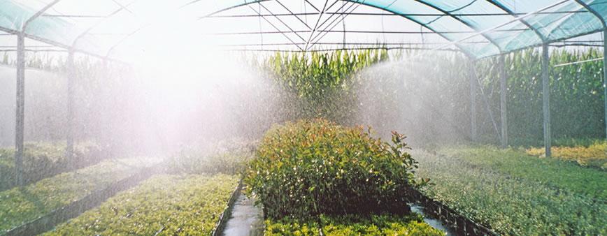 nebulizzatori agridor irrigazione nebulizzata serre