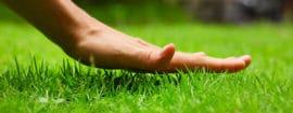 sementi concimi prato bottos naturalgreen
