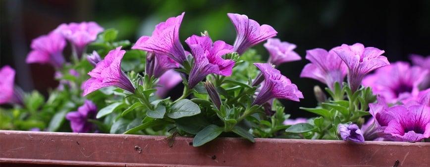 come innaffiare le piante in vacanza